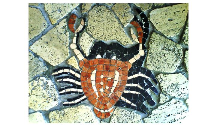 cia-de-pisos-argentina-42-cangrejo